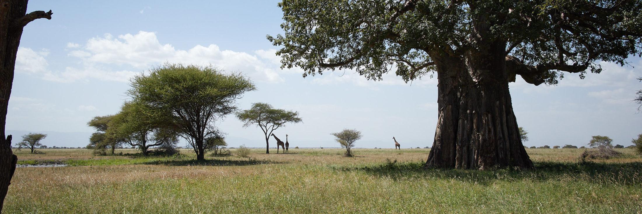 Weltenaeufer - Tanzania